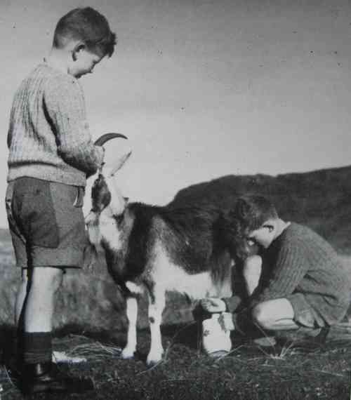 Boys and goat in Inishowen